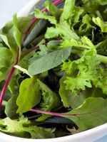Польза листового салата, возможный вред, кому