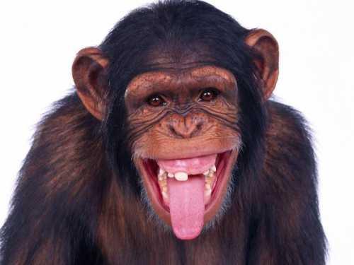 К чему снится обезьяна, ловить обезьяну,