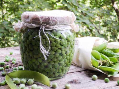 Консервированный зеленый горошек в домашних условиях