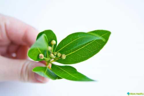 Польза отвара лаврового листа, возможный вред,