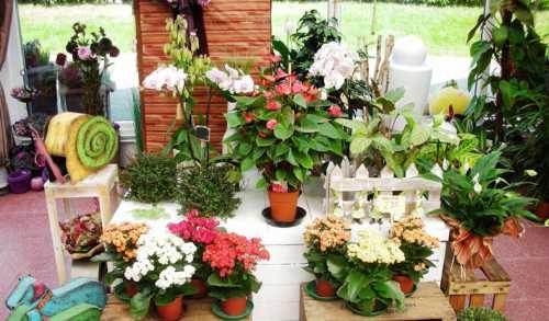 Выбираем цветы для дома